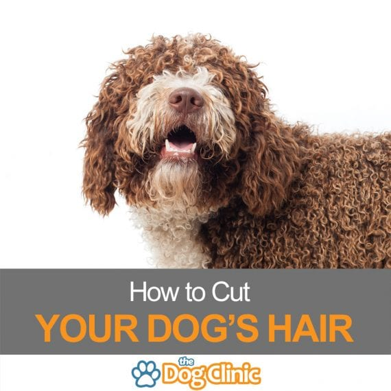 How to cut your dog's hair