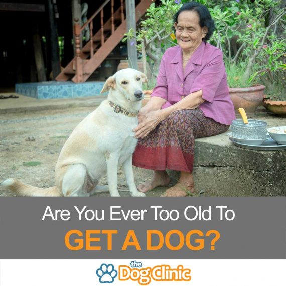 If you're thinking of getting a dog, you need to take your age into account