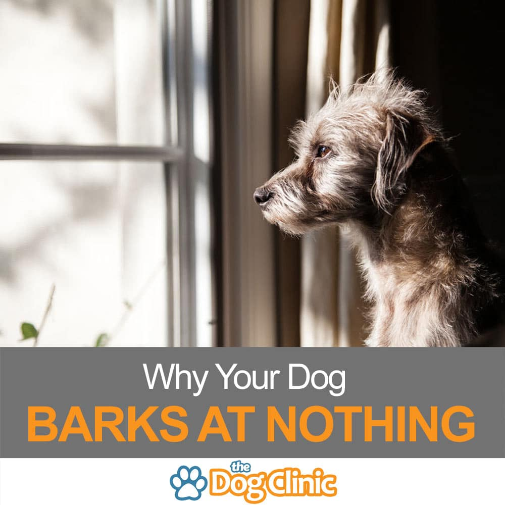 Why Your Dog Barks at Nothing