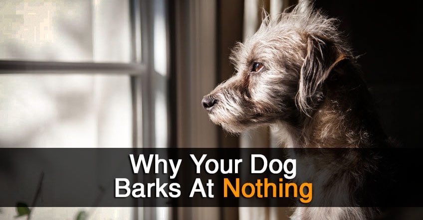 Dog Barks at Nothing? Here's Why He's Really Barking