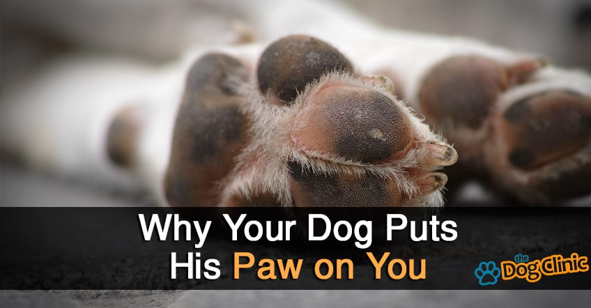 Why does my dog put his paw on me Why does my dog bark when i leave