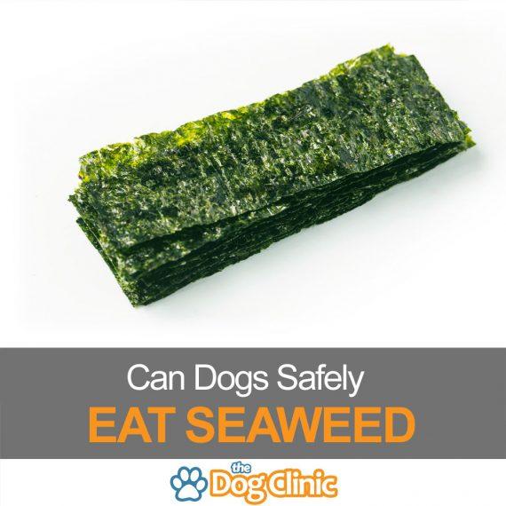 Want to know if dogs can eat seaweed? Keep reading to find out