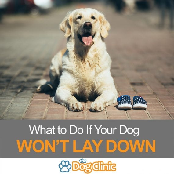 What to do If Your Dog Won't Lay Down