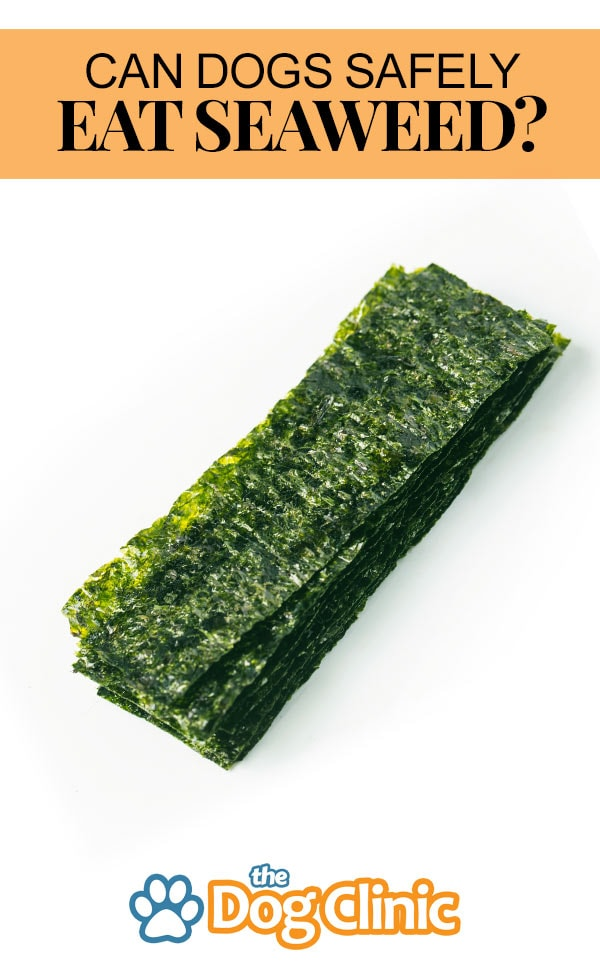 Can dogs safely eat any type of seaweed?