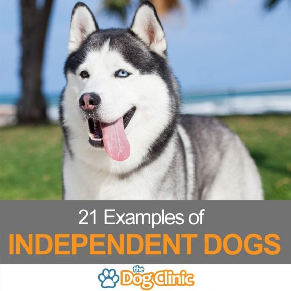 Our list of independent dog breeds