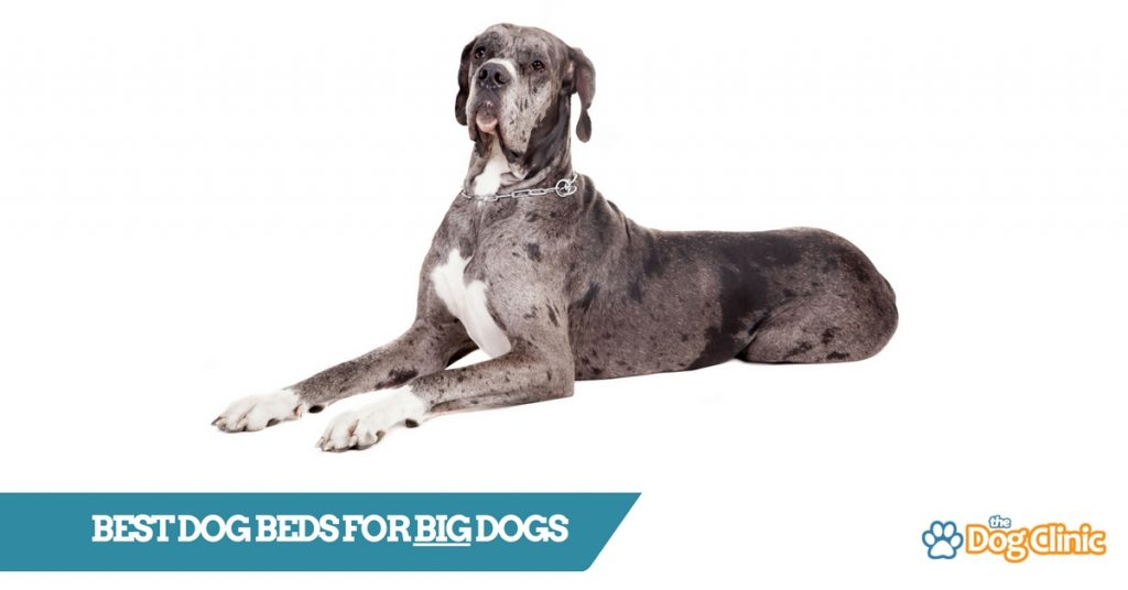 TheDogClinic.com Guide to the Best Dog Beds for Large Dogs