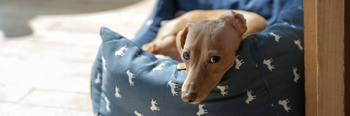 Read our guide to the best dog beds