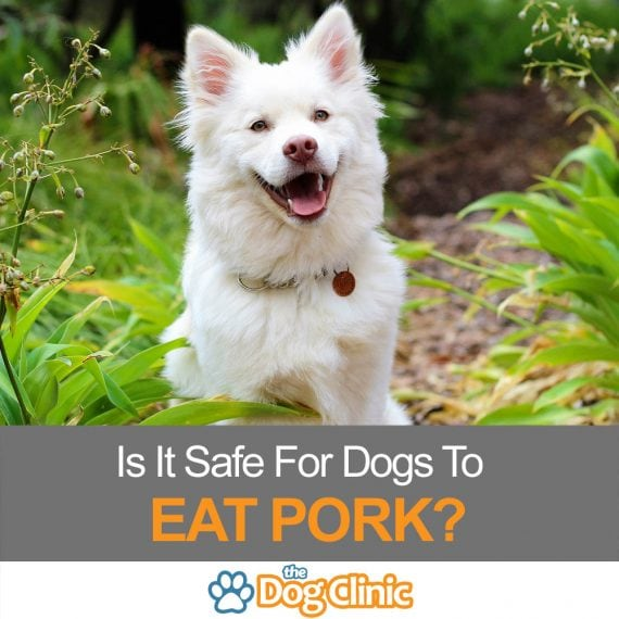 Is it safe for dogs to eat pork?