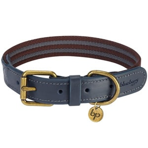 The Blueberry Pet Stripe is one of the most stylish dog collars in this category
