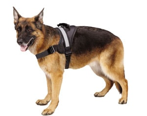 The Expawlorer is one of the best large dog harnesses.