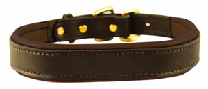 The Perri's Padded Dog Collar has a traditional style
