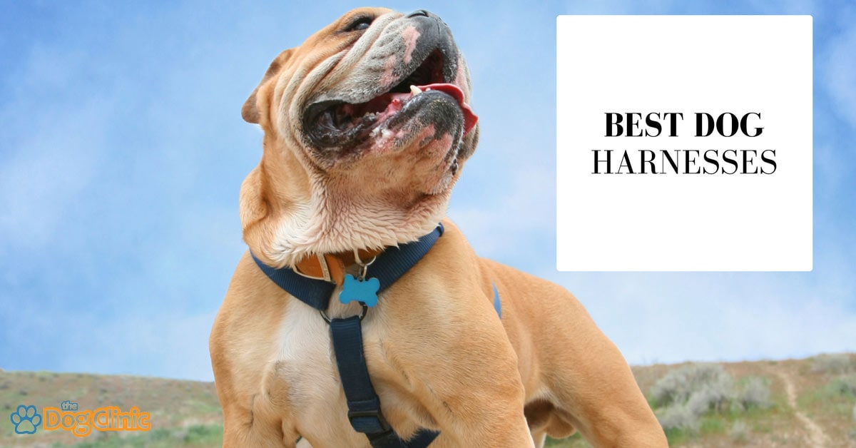 7 Best Dog Harnesses Reviewed  2020    Buyer U0026 39 S Guide