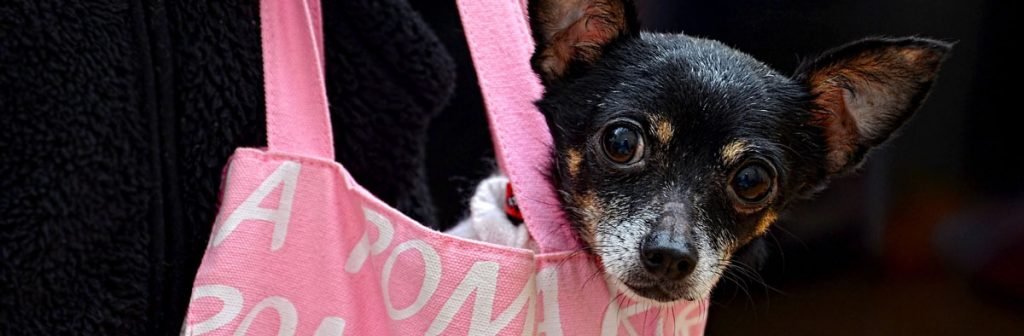 A dog in a pink carrier