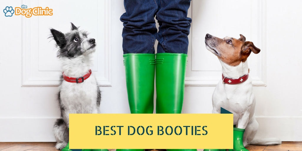 Best Dog Boots For Hiking And Winter That Stay On 2019