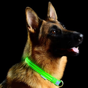 The Pet Industries LED Collar is one of the most popular options