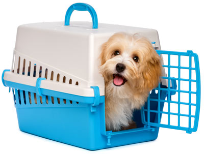 A dog in a plastic crate