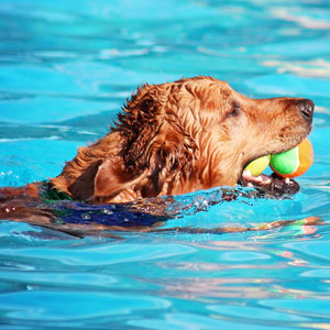 A dog swimming in a pool