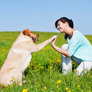 Dog training can be a great way to burn mental energy