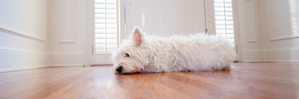How To Make Dog Door More Energy Efficient