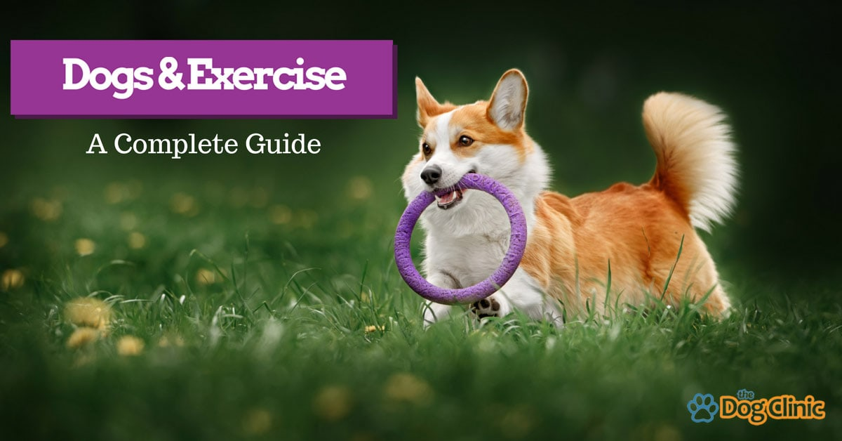 A guide to exercise and how much your dog needs