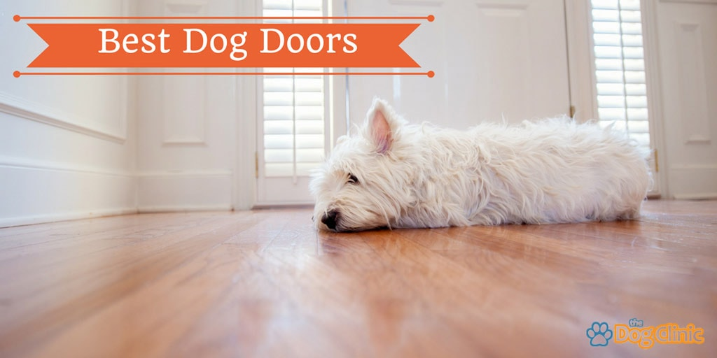 7 Best Dog Door Reviews 2018 The Dog Clinic
