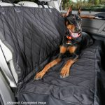 Our top pick for a back seat