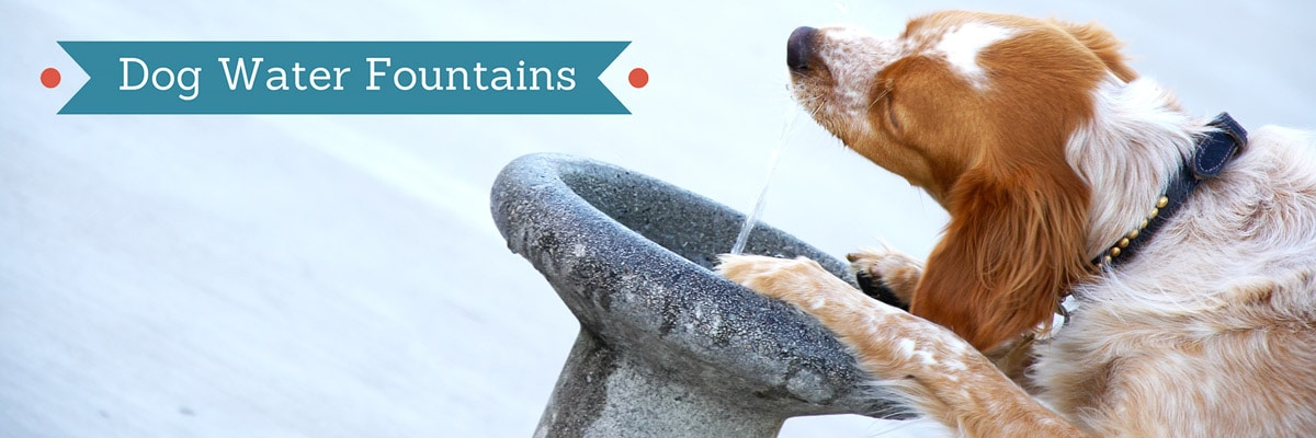 Guide to water fountains for dogs