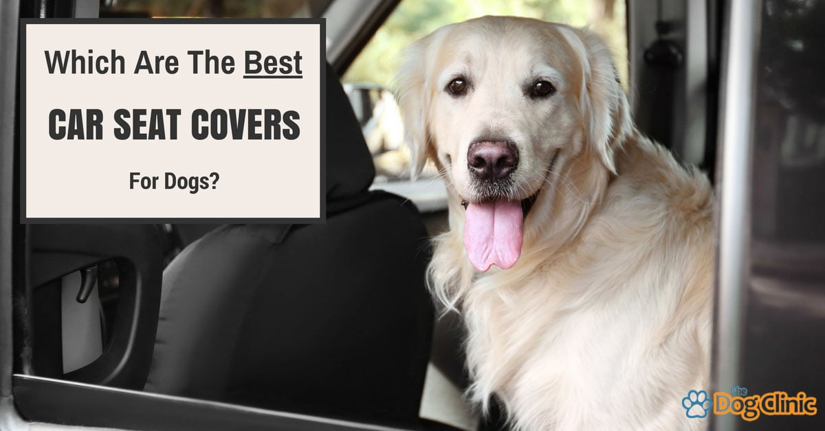 Which Are The Best Car Seat Covers For Dogs Dog Clinic