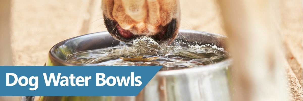 Our guide to the best water dishes for puppies and dogs