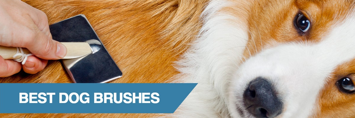 A guide to the best dog brushes