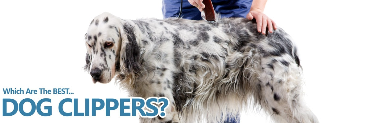 A guide to the best clippers for dogs