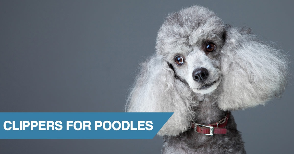 Best Grooming Clippers For Poodles And Poodle Mixes 2019