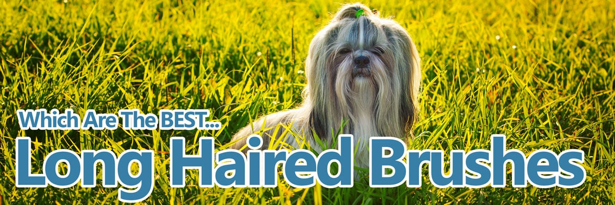 Best brushes for long haired dog breeds