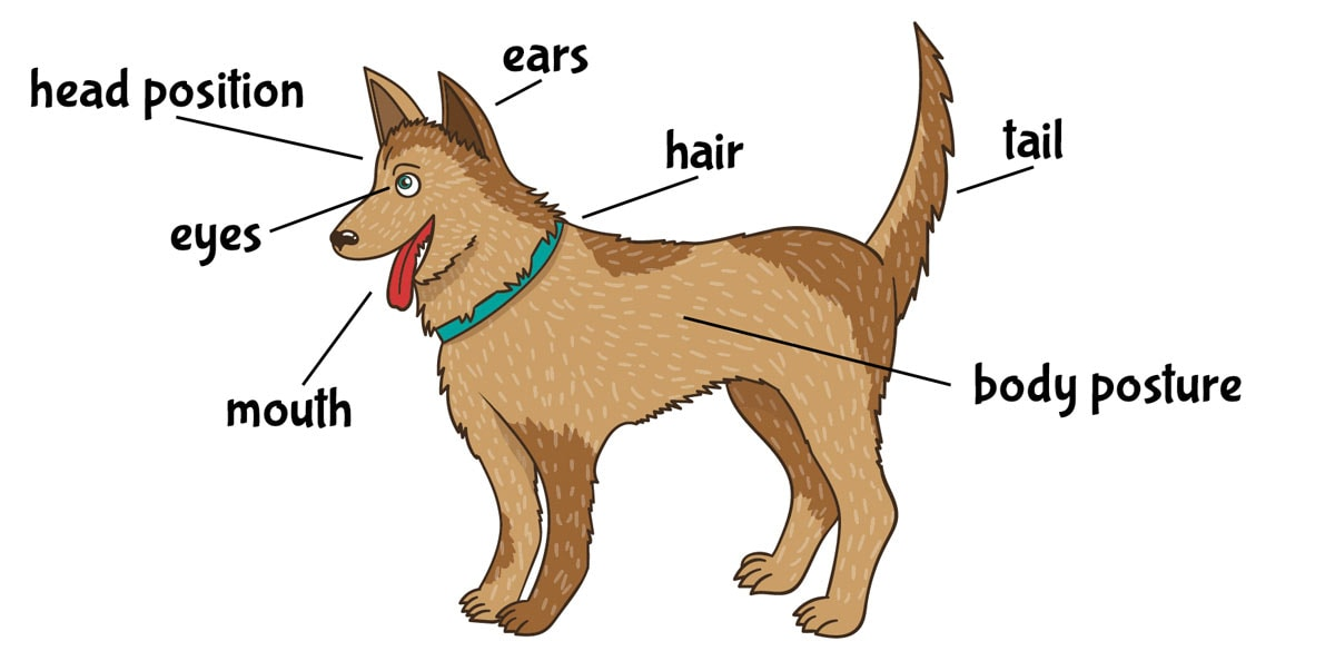 Body parts used for dog communication