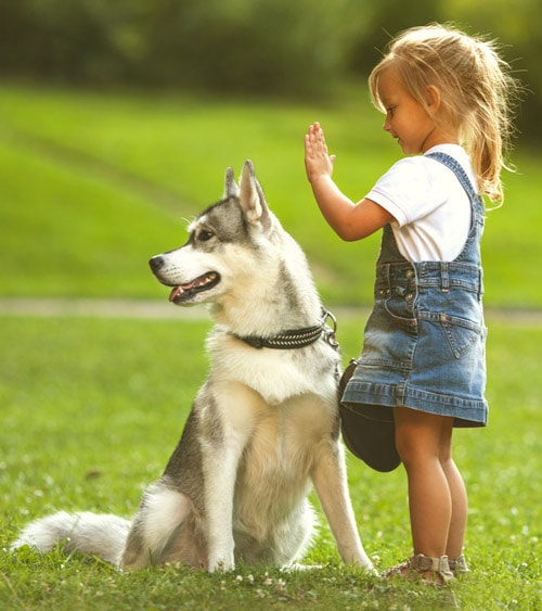 A child with a husky