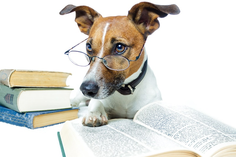 A dog reading a book
