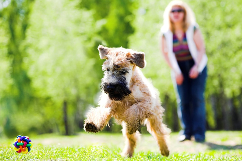A guide to seven dog training myths