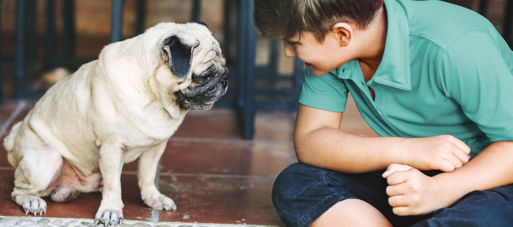 A pug with child