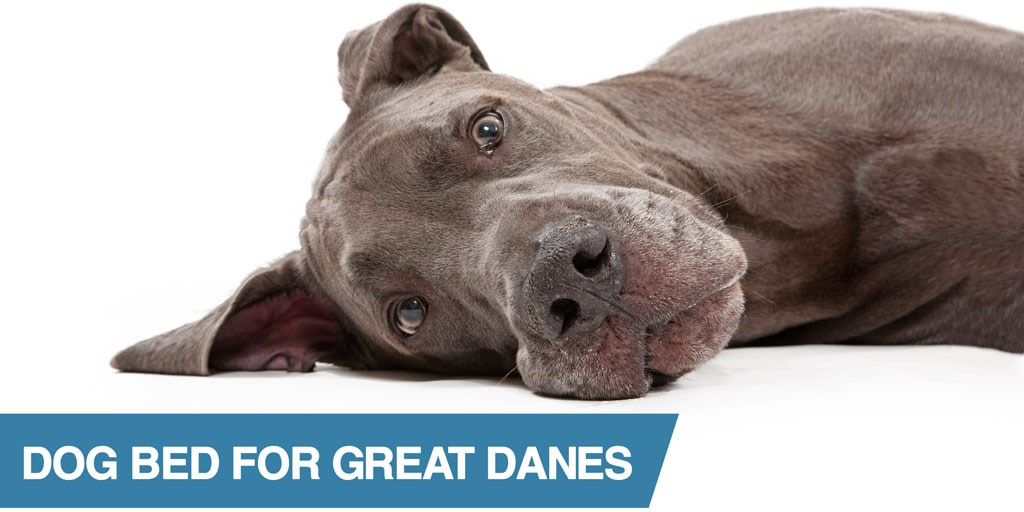 5 Best Great Dane Dog Beds Including Orthopedic Amp Elevated