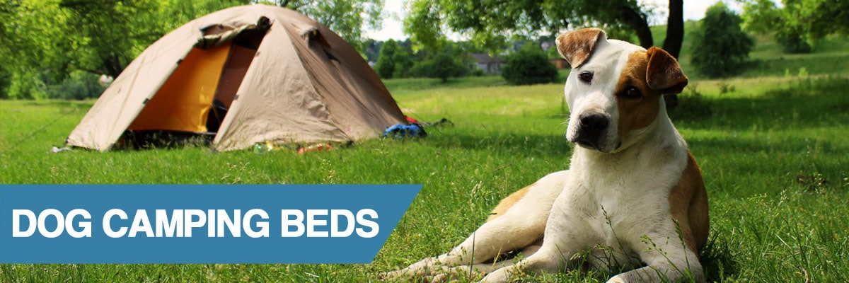 A guide to camping beds for dogs