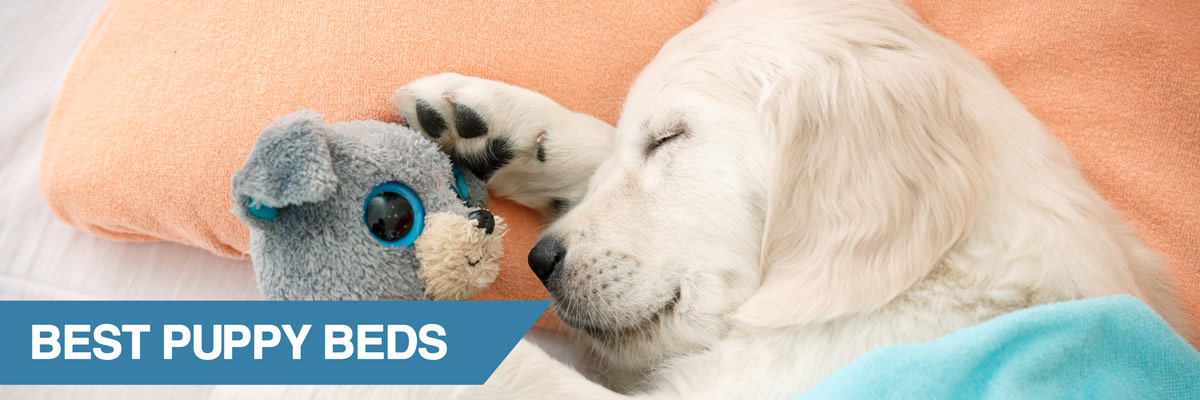 A guide to the best puppy beds