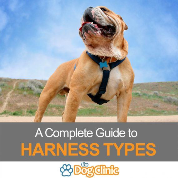 A guide to dog harness types