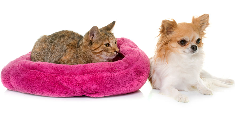 A cat on a dog bed