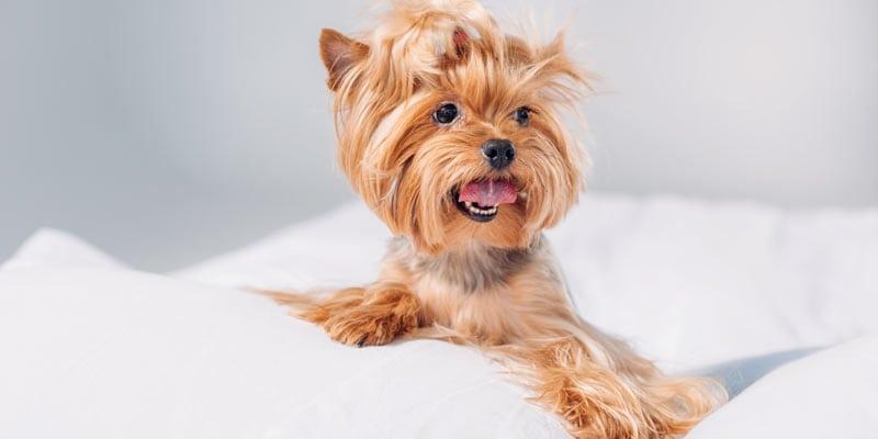 A happy puppy