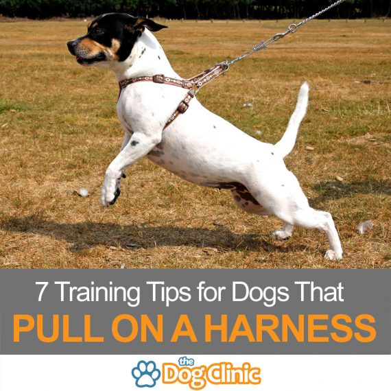 Dog training tips for a harness