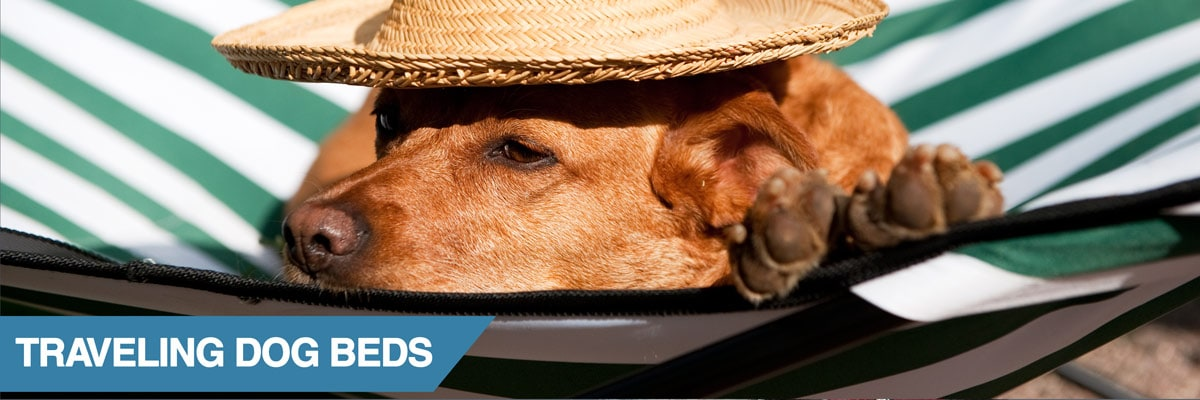A guide to travel dog beds