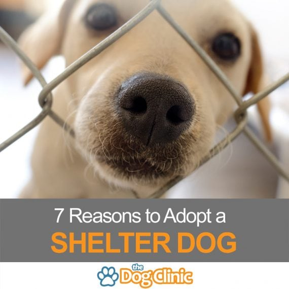 Why adopt a shelter dog