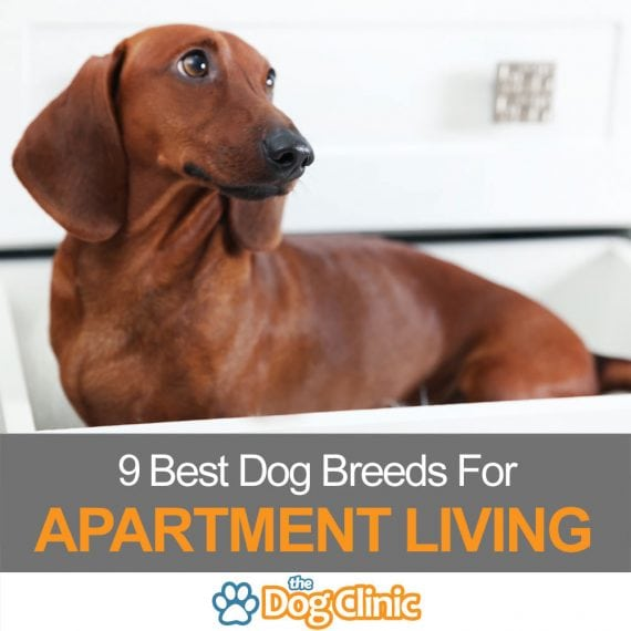 9 Best Apartment Breeds