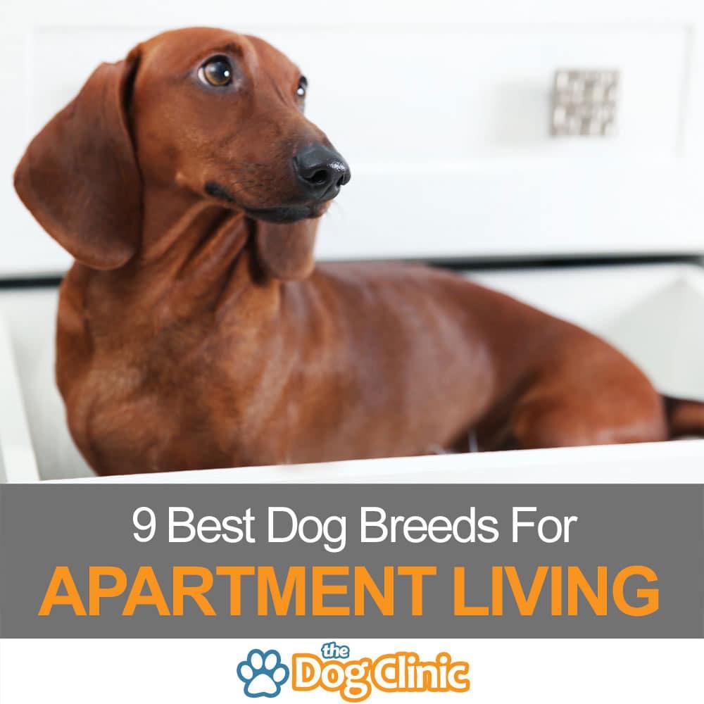 9 Best Dog Breeds For Apartment Living