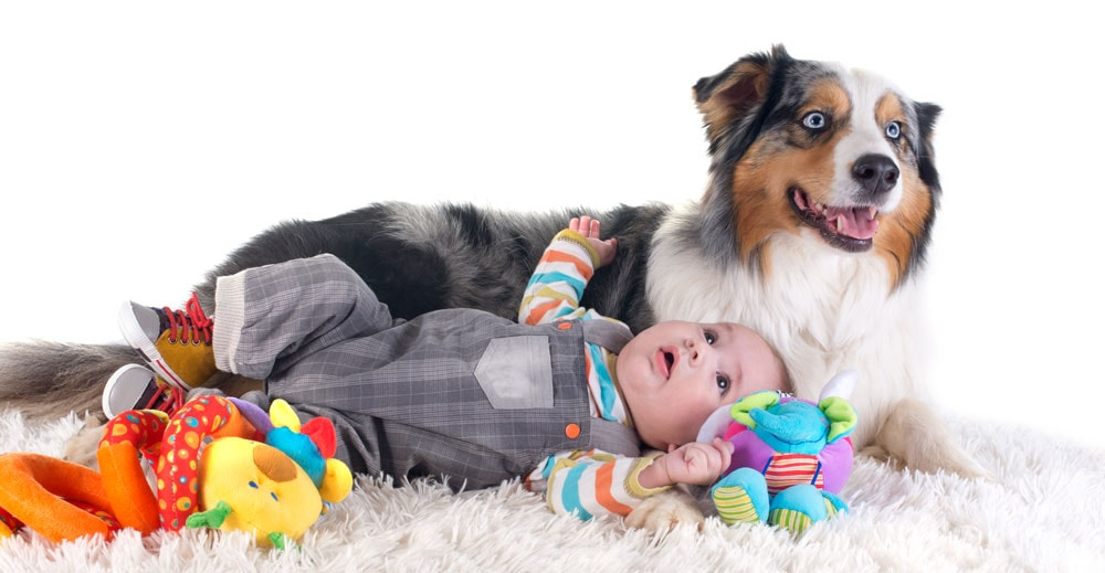 Australian Shepherd with a baby